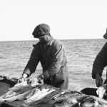 Pêcheurs de morue